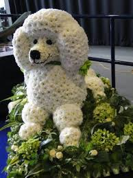 Dog Flower Arrangement Poodle Dog In Flowers Jennifleurs Florist Colchester