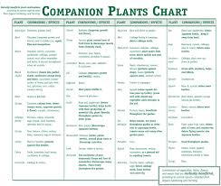 Companion Planting Garden Layout Companion Garden Layout Excellent Home Design Best Companion