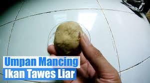 Umpan Mancing resep umpan mancing ikan tawes liar vidio