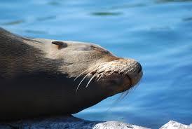 free images sea nature ocean animal wildlife zoo fauna