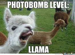 Llama Meme - oh llama by righteousanahata meme center