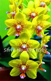 orchid plants for sale sale 120 pcs cymbidium orchid seeds home garden flower