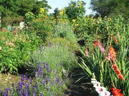 Cut Flower Garden by Cut Flowers U2013 Beddington Ridge Farm