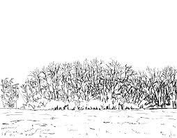 talking squares sketch those trees again a blog by irish