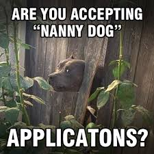 Pitbull Meme - anonymous meme are you accepting nanny dog applications