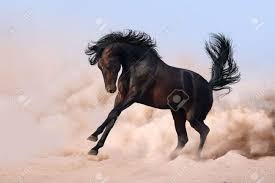 mustang horse running cute dark horse running in desert sand stock photo picture and