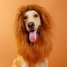 Lion Halloween Costumes Dogs Cheap Dog Lion Halloween Costume Aliexpress