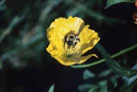Flowers Bees Pollinate - what can i do to attract bees to my tomato plants home guides