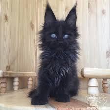 that u0027s a beautiful kitty https t co lfbcczurp9 facebook twitter