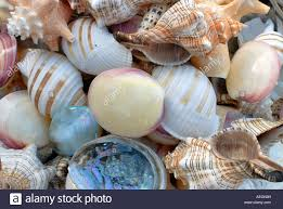 assorted seashells assorted seashells up greece stock photo royalty