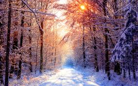 daily wallpaper snowy forest road on a beautiful winter day i