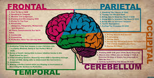 brain function and structure articles physiological reviews