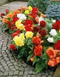 best 25 summer flowering bulbs ideas on pinterest spring
