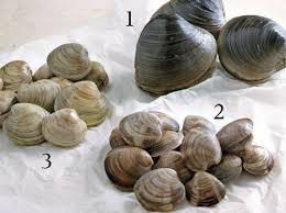 cuisiner la palourde cuisson conservation préparation tout sur les fruits de mer