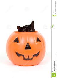 black cat and plastic pumpkin halloween stock image image 1198551
