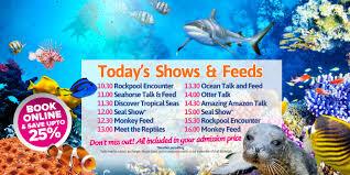 blue reef aquarium tynemouth buy discounted tickets online