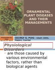ornamental plant diseases and their managements root microbiology