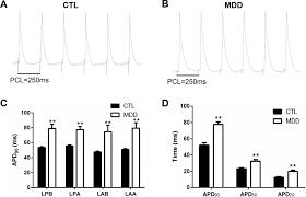 the activation of n methyl d aspartate receptors downregulates