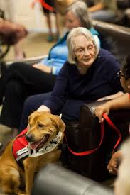 Comfort Dogs Certification Therapy Dog Training Austin Therapy Dog Certification San