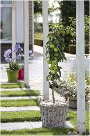 backyards cool green columnar apple tree 5 best fruit trees to