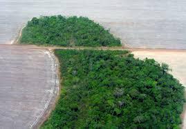 amazon rainforest native plants the amazon rainforest