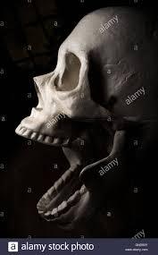 halloween skull background terrifying screaming halloween skull for october holiday