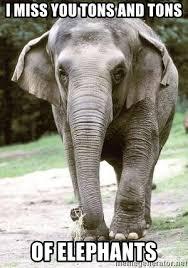 Elephant Meme - i miss you tons and tons of elephants eating disordered elephant
