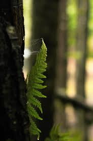 Free Picture Leaf Nature Fern Free Images Tree Nature Forest Branch Sunlight Leaf Flower