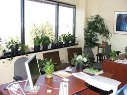 plants for office best indoor plants for office in india plants for office space desk