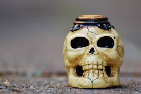 Human Anatomy Skull Bones Free Images Halloween Death Human Anatomy Scary Fear Head