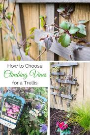 Climbing Plants On Trellis How To Choose The Best Climbing Vines For A Trellis The