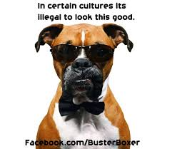 boxer dog sayings 24 best itchy dog remedies images on pinterest itchy dog