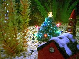 Christmas Decoration For Fish Tank by Archive Christmas Fish 2000 A Photo On Flickriver