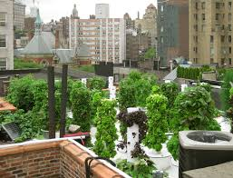 9 rooftop farms gardens bars and restaurants to savor while it u0027s