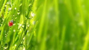 Green Plants Download Wallpaper 3840x2160 Beetle Green Drops Stems Plants