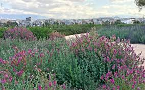 roof garden plants snfcc athens zinco green roof systems