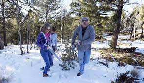 cutting own christmas tree a holiday tradition for thousands in
