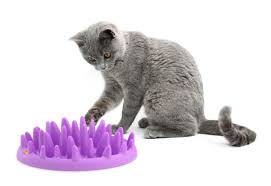 amazon com northmate catch interactive feeder for cats pet