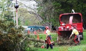 top 10 best waukesha wi tree services angie s list