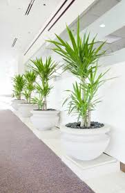 modern planters and pots plants 25 ideas that fill your living space home dezign