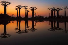 the planet u0027s most amazing trees and where to find them u2013 fodors
