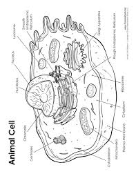 animal cell diagram labeled tim u0027s printables