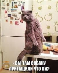 Grappige Memes - 10 grappige memes memes funny pets and captions