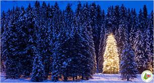 large christmas real christmas trees london we now deliver decorated christmas