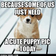 Cute Puppies Meme - cute puppy today