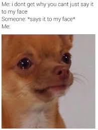 Funny Dog Face Meme - say to my face