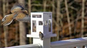 food fashion home modern bird feeder update