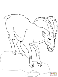 ibex for coloring page animal canvases of wild goat coloring