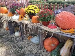 Local Pumpkin Farms In Nj by Annual Farm To Fork Fall Festival Happening At Duffield U0027s Farm