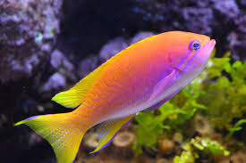 freshwater aquarium fish some information on subject